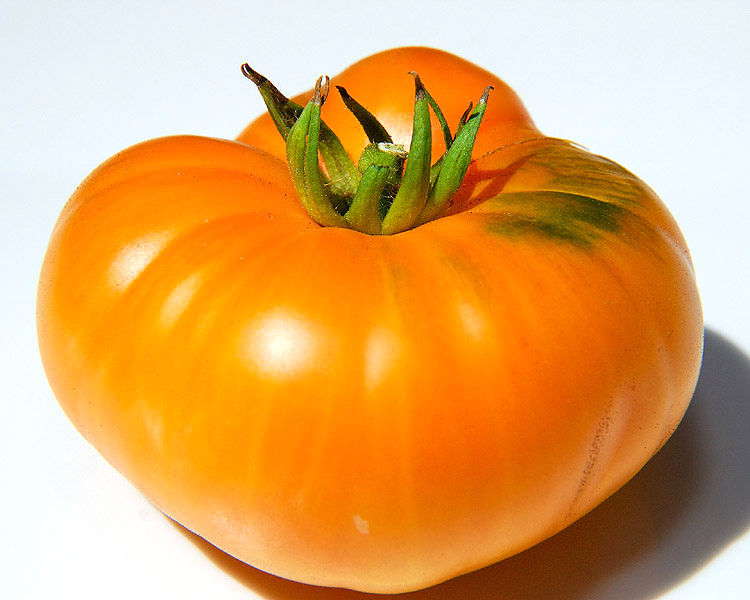Heirloom Tomato 'Persimmon'