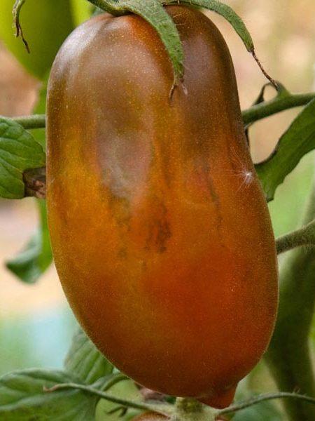 Tomato 'Black Icicle'