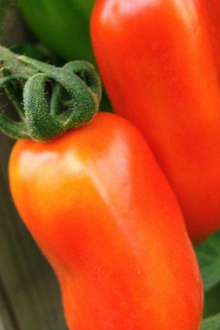 Heirloom Tomato 'San Marzano'