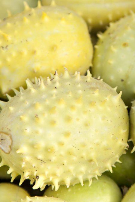 Cucumis anguria 'Liso Calcutta' cucumber