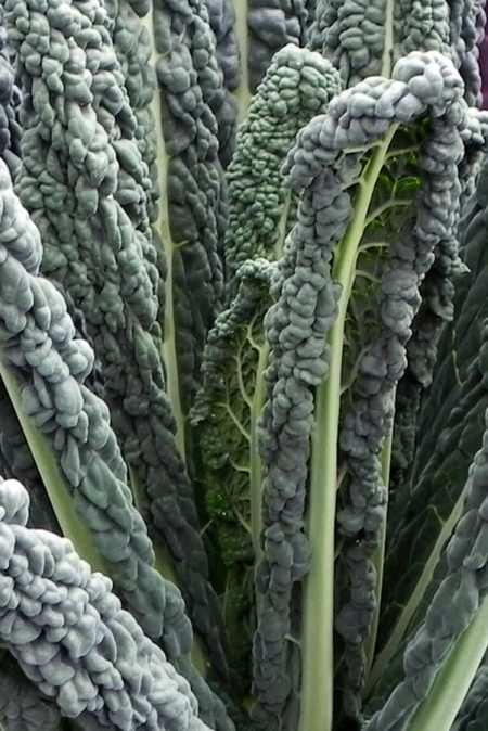 Kale 'Black Magic'