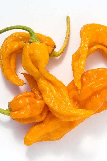 Heirloom Pepper (Blazing Hot) 'Fatalii'