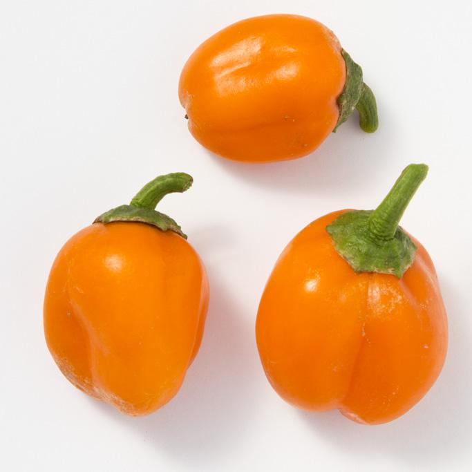 Pepper (Sweet) 'Lunchbox Orange Snack'