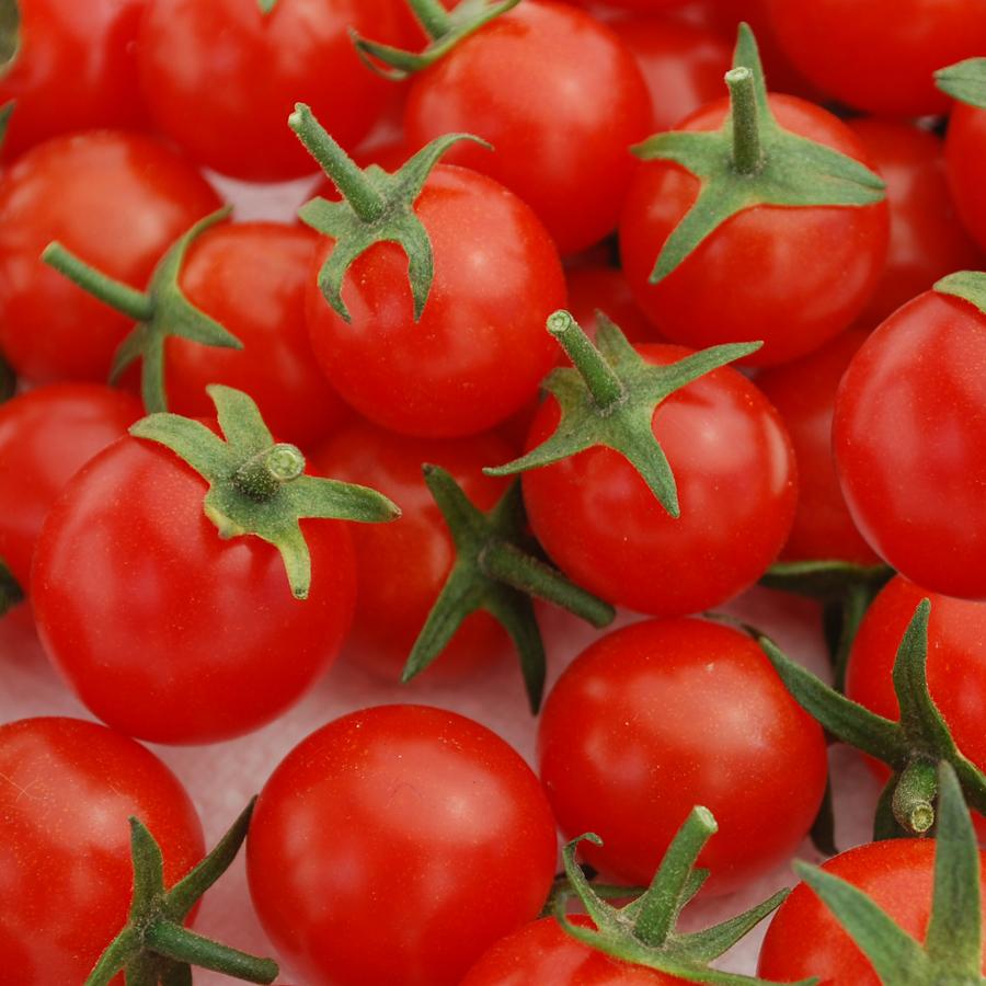 Tomato 'Sweet Apertif' Cherry Tomato