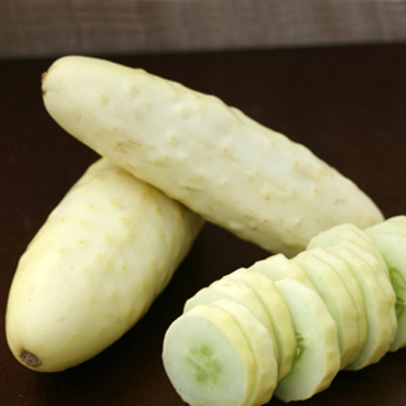 Cucumber 'Silver Slicer' Slicing cuke