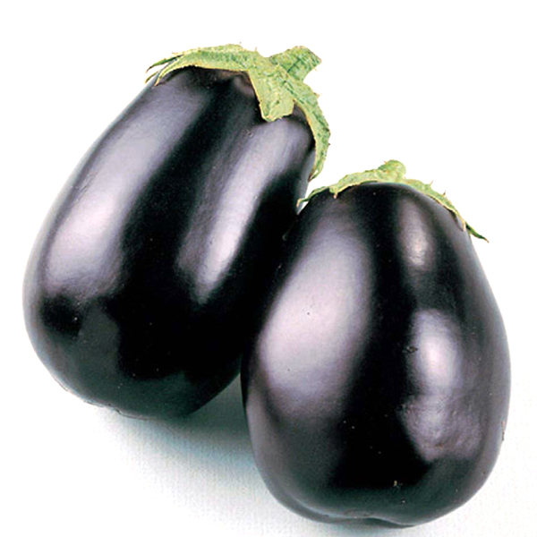 Eggplant 'Black King' Grafted Mighty Veggie
