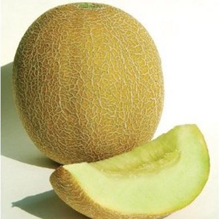 Melon 'Diplomat' Cantaloupe