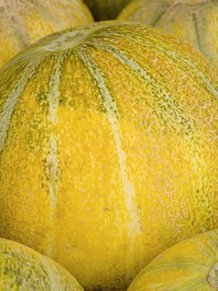 Melon 'Ha'Ogen' Cantaloupe
