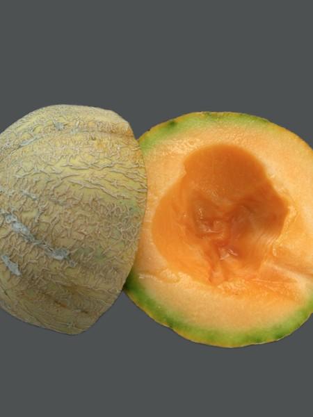Melon 'Delicious' Cantaloupe
