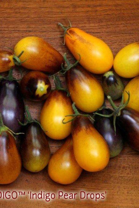 OSU INDIGO7 Pear Drops3
