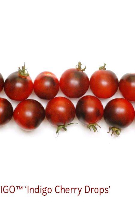 OSU INDIGO9 Cherry Drops2