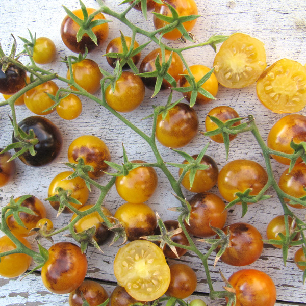 Tomato INDIGO™ 'Gold Berries'
