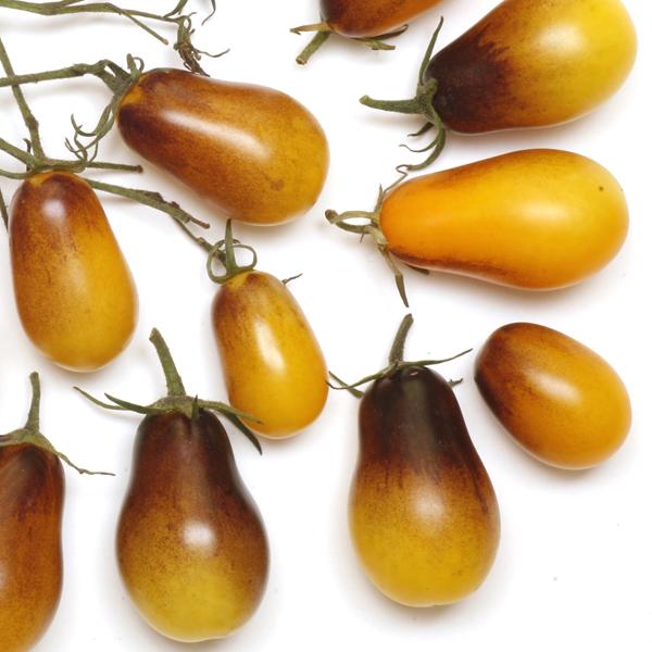 Tomato INDIGO™ 'Indigo Pear Drops'