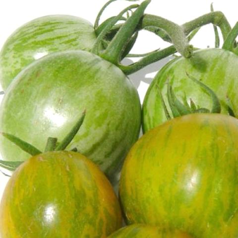 Tomato 'Abracazebra'