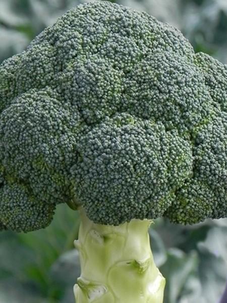 Broccoli 'Emerald Jewel'