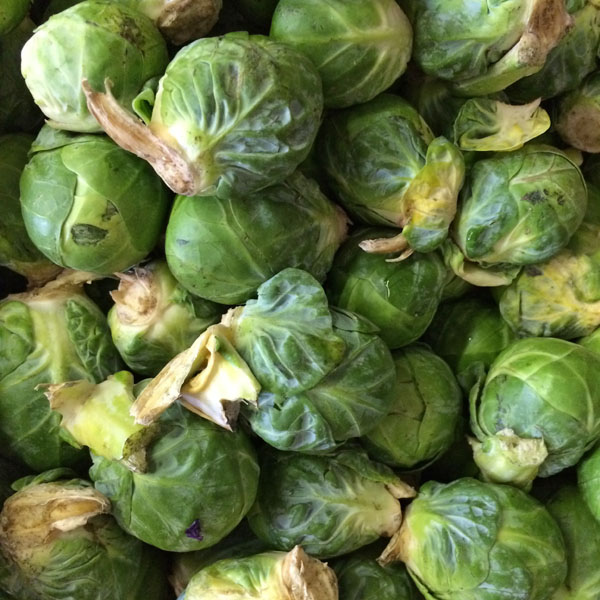 Brussels Sprouts 'Franklin'
