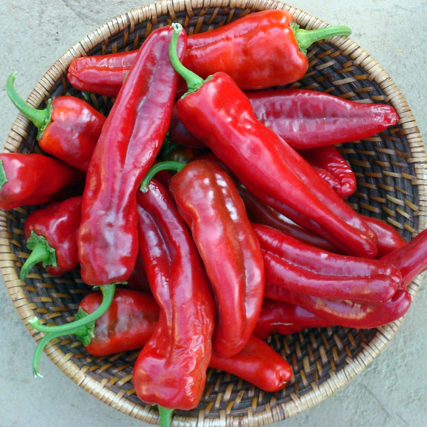 Pepper (Hot) 'Giant Ristra'