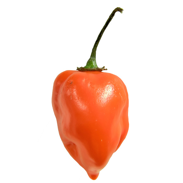 Pepper (Hot) 'Habanero Orange'
