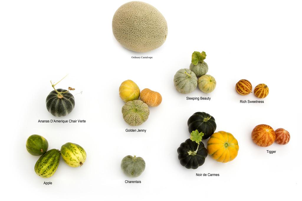 Melon 'Mini Melons' poster