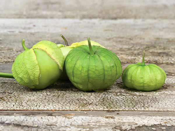 Tomatillo/Ground Cherry 'Grande Rio Verde' Tomatillo