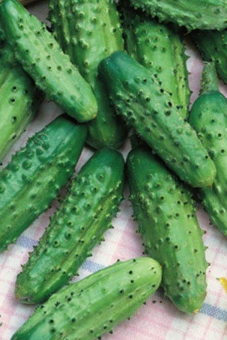 Cucumber 'Parisian Gherkin' Pickling