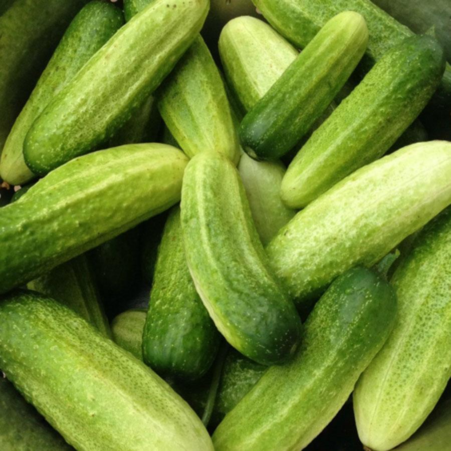 Cucumber 'Vorgebirgstrauben' Pickling