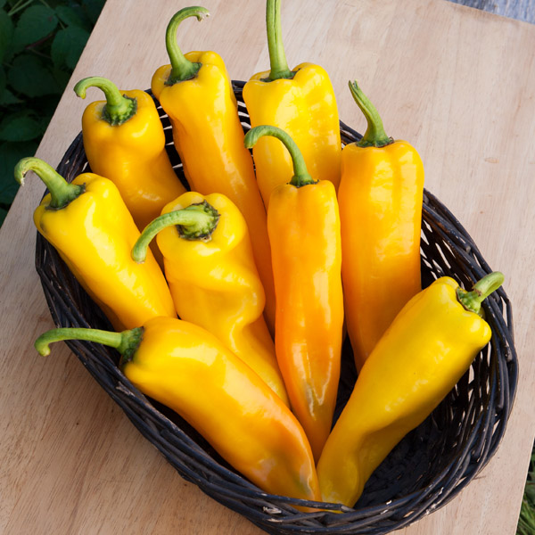 Pepper (Sweet) 'Lively Italian Sweet Yellow'