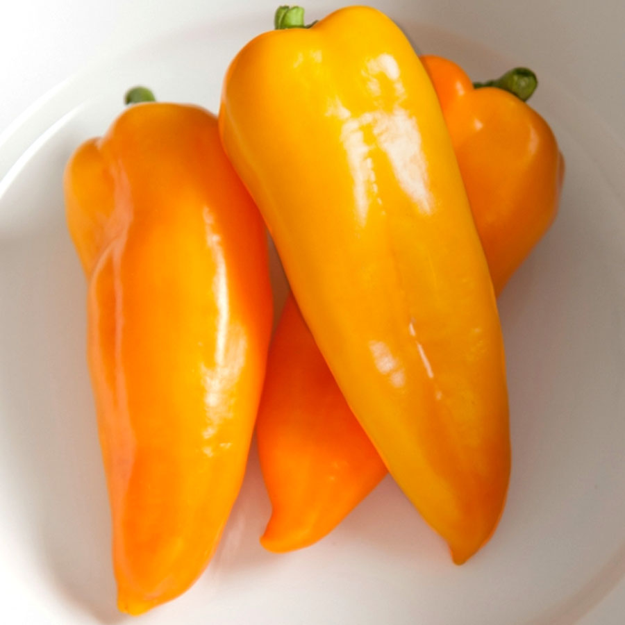 Pepper (Sweet) 'Cornito Giallo'