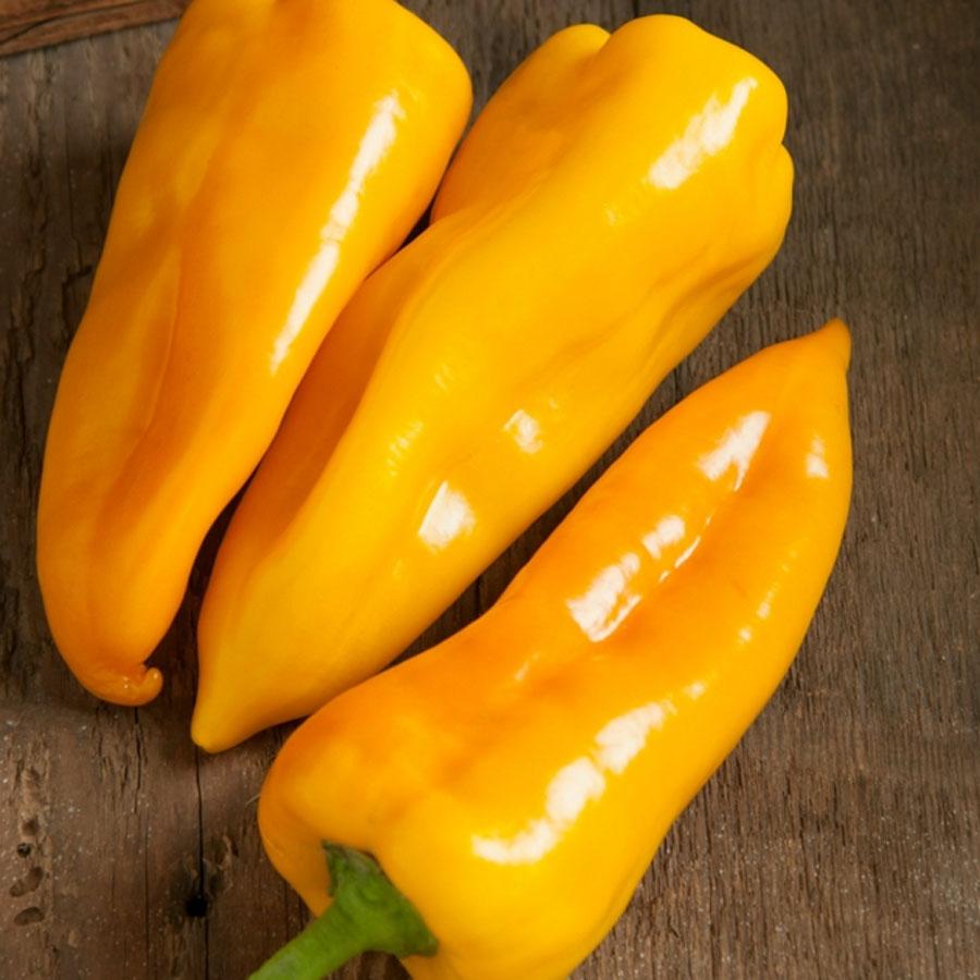 Pepper (Sweet) 'Escamillo'