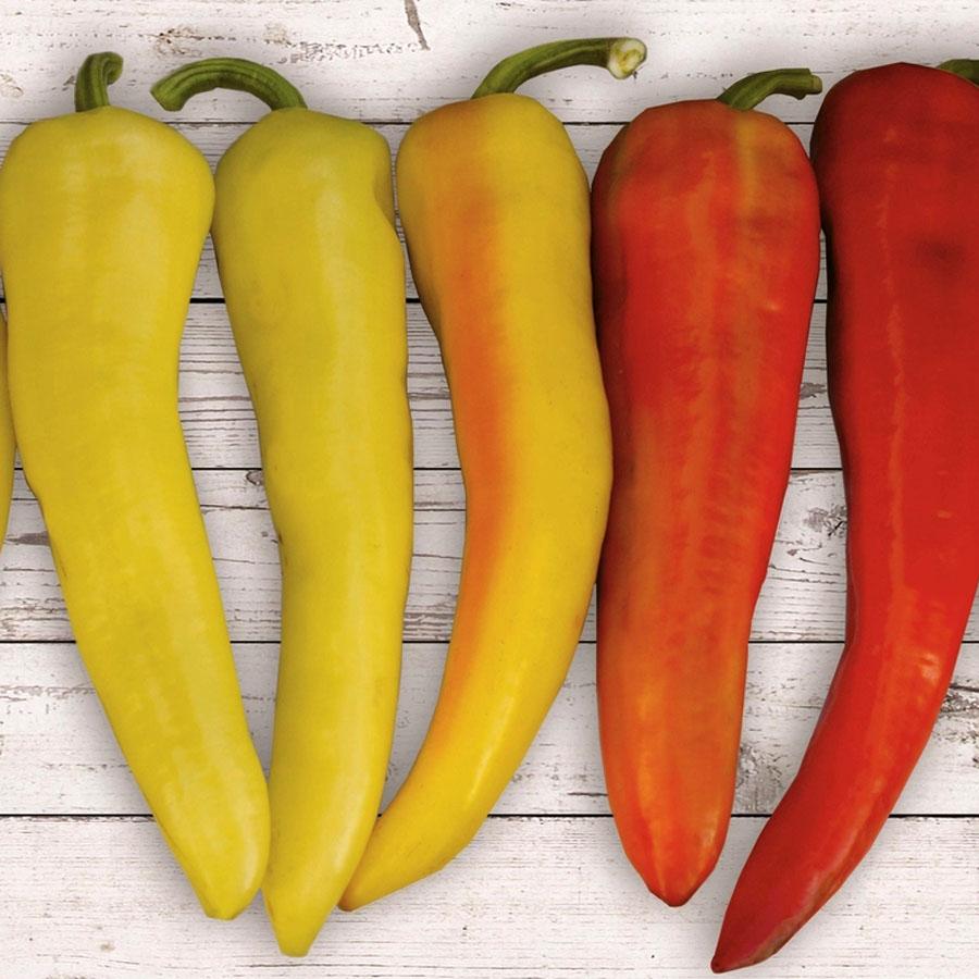 Pepper (Sweet) 'Sweet Sunset'
