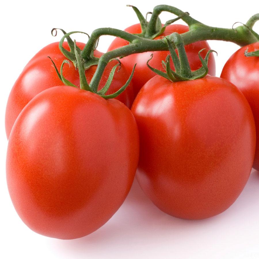 Tomato 'Little Napoli' roma/paste