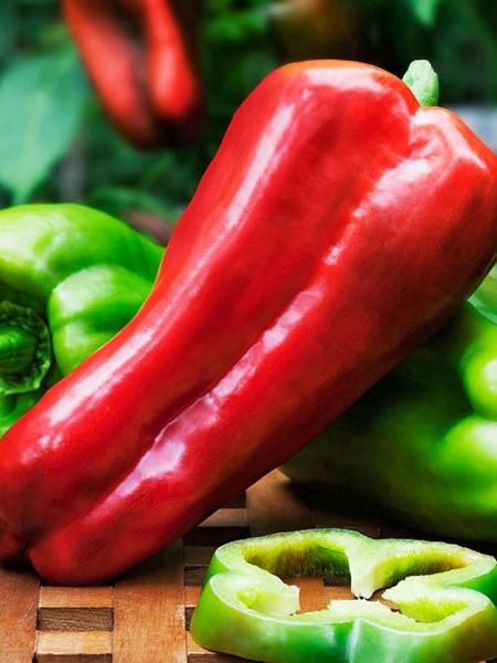 Pepper (Sweet) 'Big Bertha' Bell