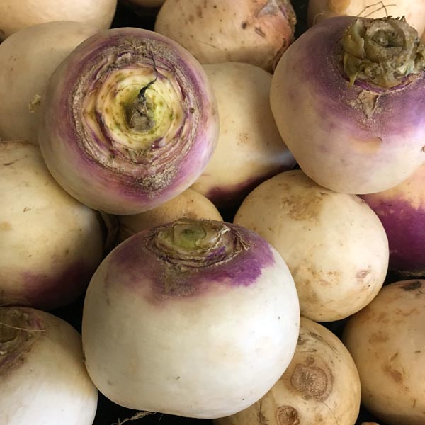 Turnip 'Purple Top White Globe'