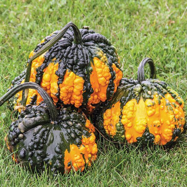 Decorative Gourd 'Hoargarth' Large Gourd
