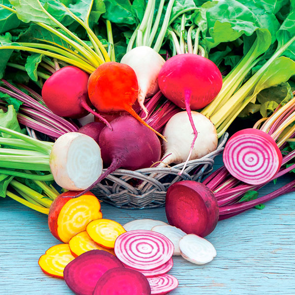 FW Beet 'Rainbow Mix'