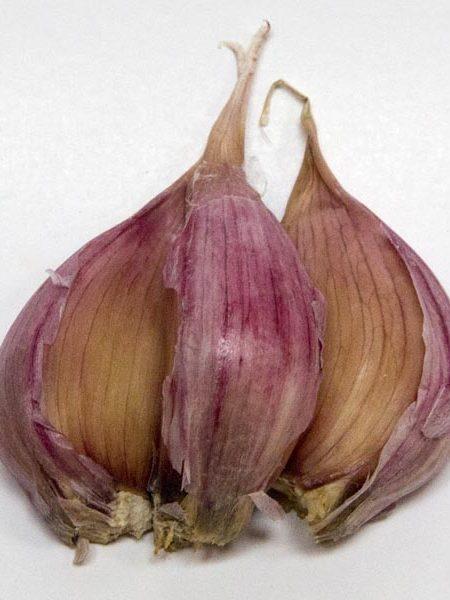 Garlic 'Deerfield' Purple Stripe Hardneck