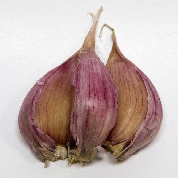 Garlic 'Deerfield' Purple Stripe Hardneck