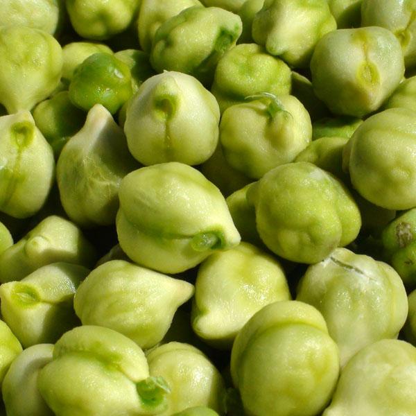 Heirloom Bean 'Tualatin' Garbanzo Bean