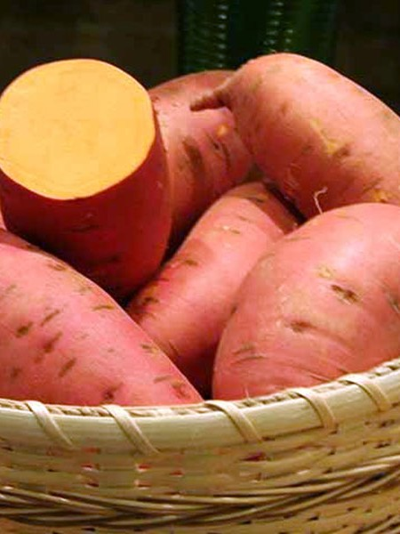 Sweet Potato 'Covington'