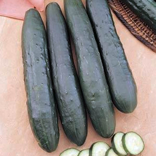 Cucumber 'Burpless Supreme' Burpless