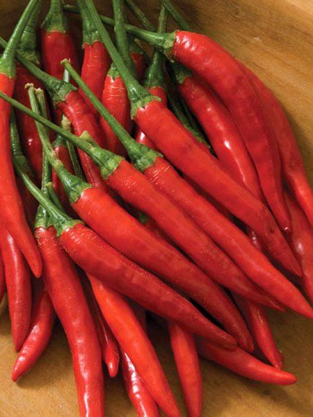Pepper (Hot) 'Bangkok' Thai pepper
