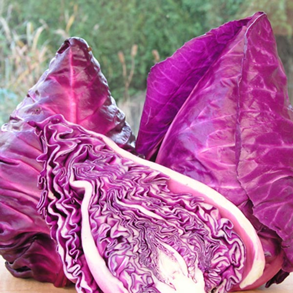 Cabbage 'Kalibos'