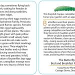 Butterfly 11 - Purplish Copper