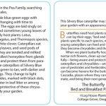 Butterfly 15 - Silvery Blue