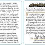 Butterfly 21 - FireRim Tortoiseshell
