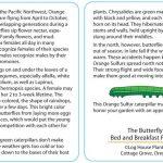 Butterfly 9 - Orange Sulfur