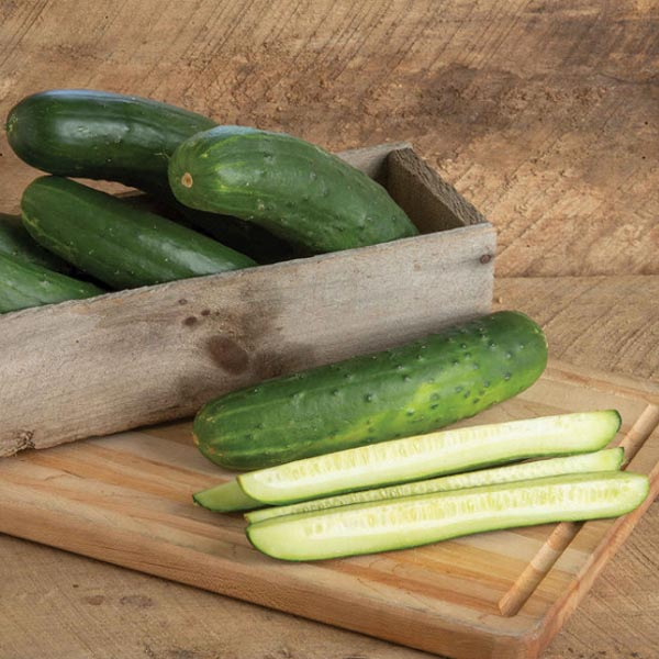 Cucumber 'Bristol' Slicing