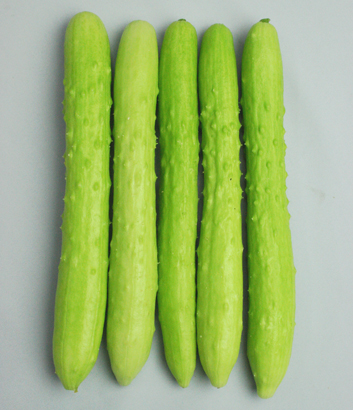 Cucumber 'Lime Crisp' F1 Slicing
