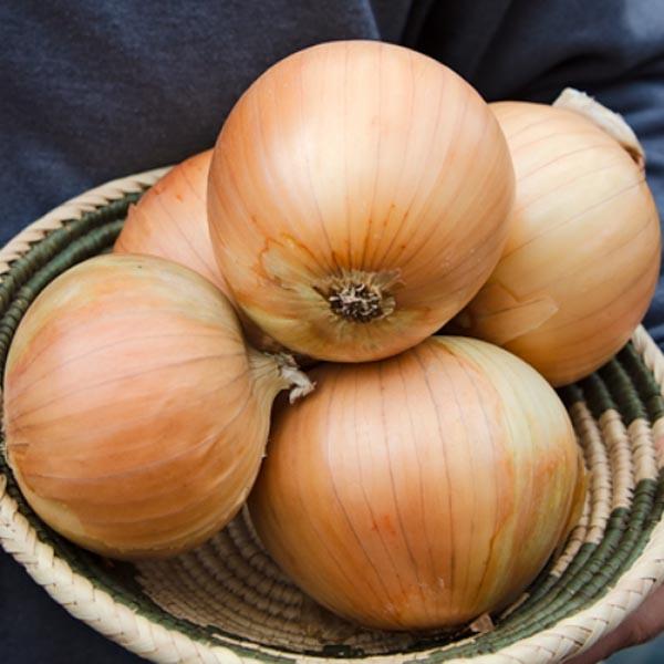 Onion 'Zoey'