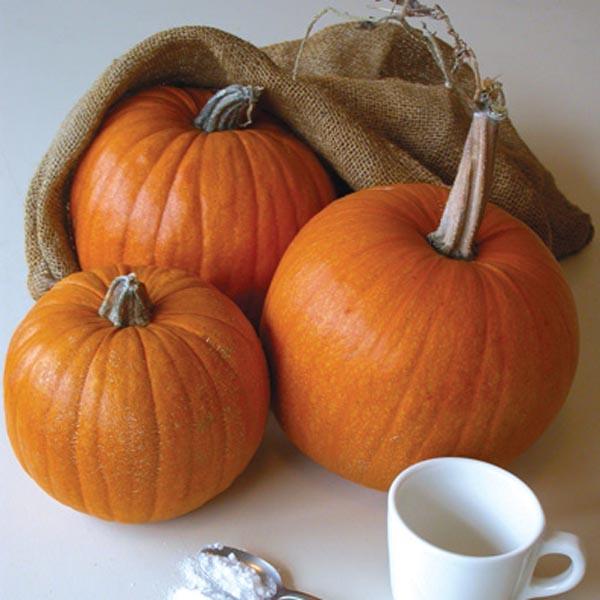 Pumpkin 'Small Sugar'